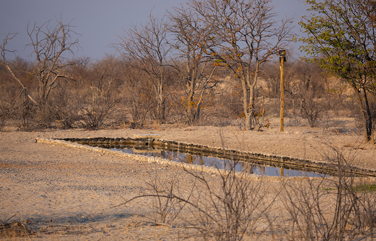 Nearby waterhole visited from time to time by small game