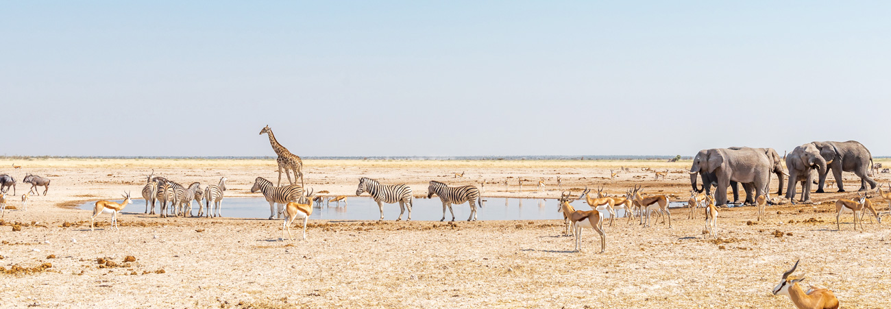 Located at Etosha National Park